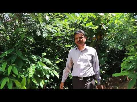 Miyawaki Forest,Bangalore.