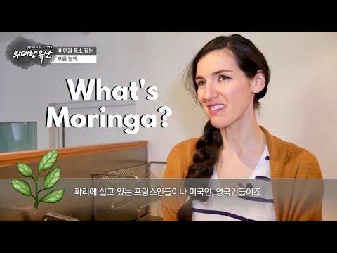 what's-moringa?-🌿|-ann's-on-korean-tv!-📺