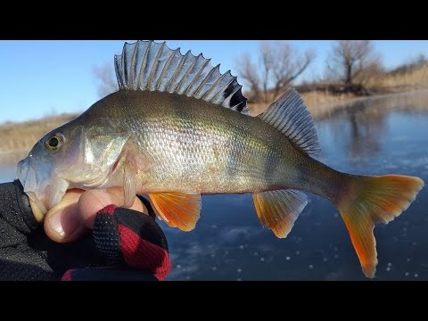 Ещё одна хитрая зимняя уловистая оснастка: зимой рыба на неё клюёт лучше
