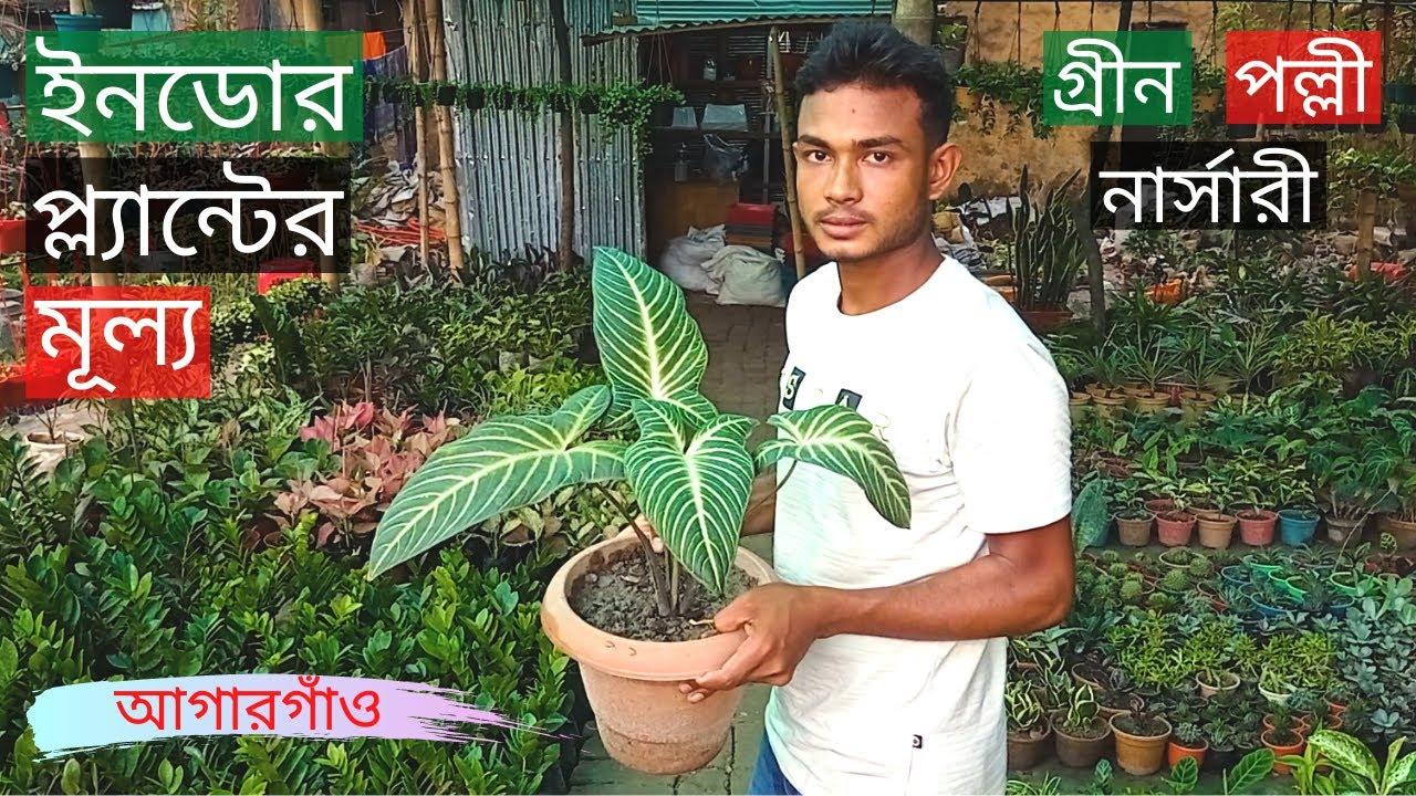 Indoor Plants Price In Green Polli Nursery At Agargaon🍃ইনডোর প্ল্যান্টের মূল্য🍂Gardening Bangladesh
