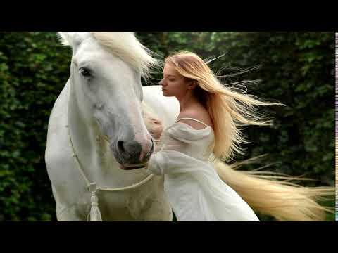 Pferd Küsst Anderes Pferd Süße Pferde Bilder Youtube