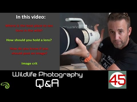 Wildlife Q&A - Episode 45:  Where to see lions, how to hold a lens and should you post that image?
