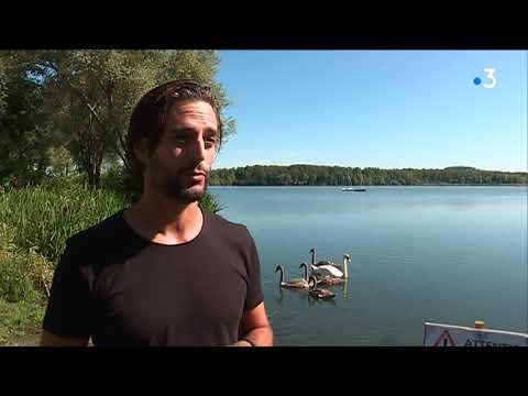 VIDÉO. Condé-sur-l'Escaut : des plans d'eau interdits à la baignade à cause de la présence de cyanobactéries - - France 3 Hauts-de-France