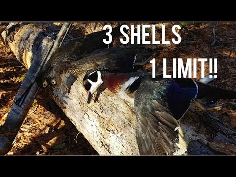 A Limit Of Ducks With Three Shells [Columbia SC]