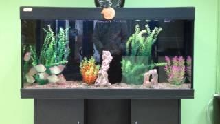 Аквариум Спорт клуб Планета(Аквариум находится на обслуживании. Рыбок кормят Tetra pro colour -преимущество которым обладает корм, это его..., 2014-06-11T21:57:33.000Z)