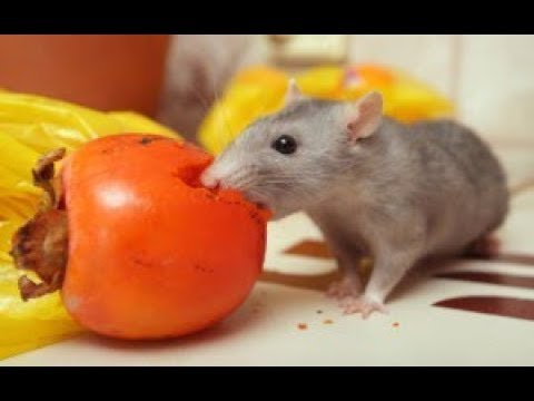 Protect And Rid Your Garden Of Rodents