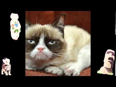Talking Puppy Funny Animal Compilation Funny Jokes And Videos Cat Poems Funny