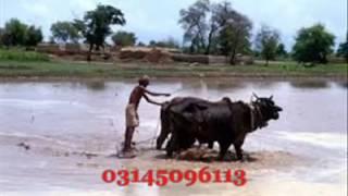 Mahiy by punjabi