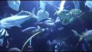 Caesars Palace Aquarium-Las Vegas
