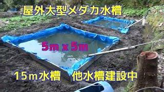 知人が去年よりメダカとどじょうを趣味で飼育したいと 15mの水槽と5m...