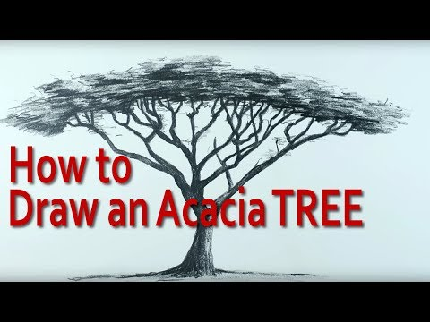 How to Draw an Umbrella Thorn Acacia Tree