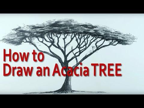 How to Draw an Umbrella Thorn Acacia Tree