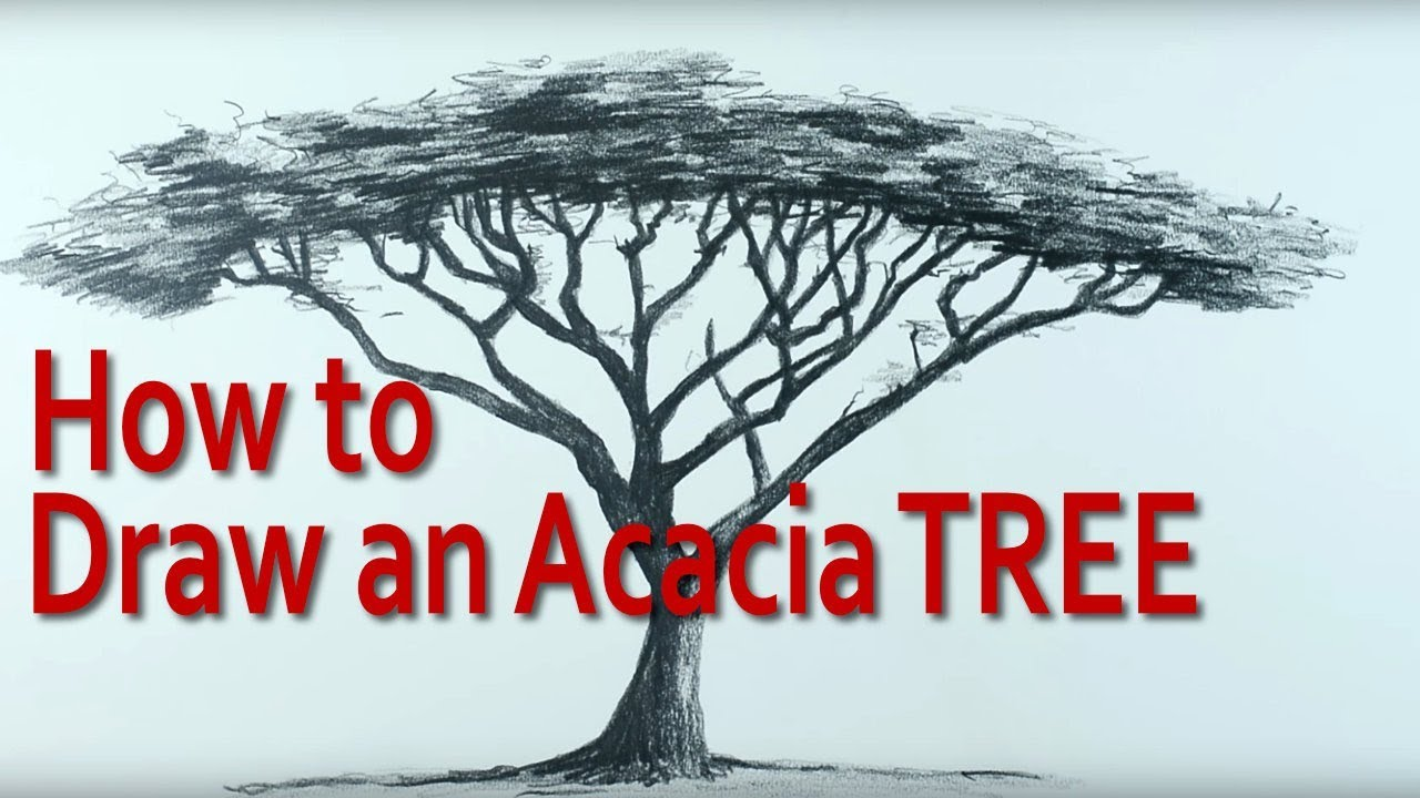 How To Draw An Umbrella Thorn Acacia Tree Youtube