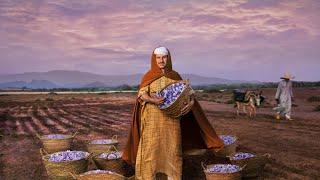 الزعفران.. الذهب الأحمر لتالوين - المغرب