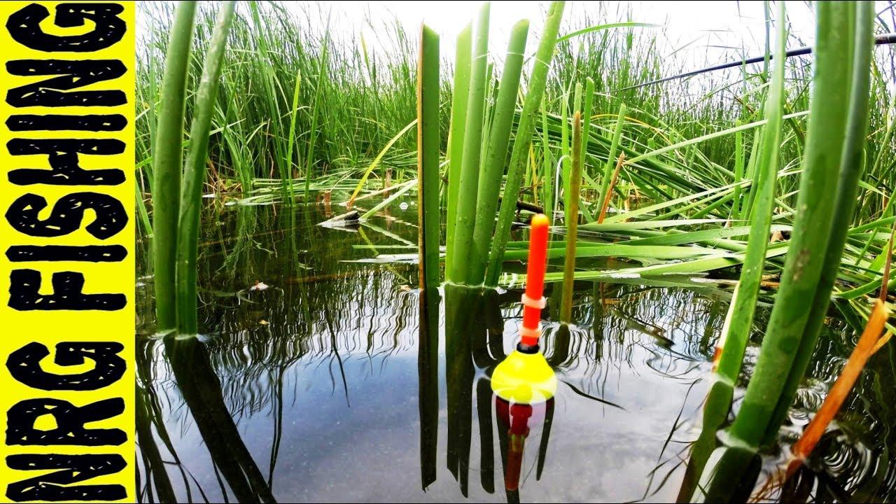 Ловля ЛЕТНЕГО КАРАСЯ и ЛИНЯ на поплавочную удочку | Любителям поплавка посвящается