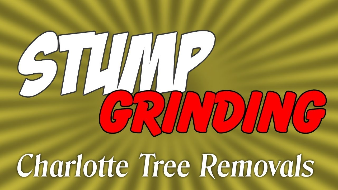 Stump Grinding Charlotte NC - YouTube