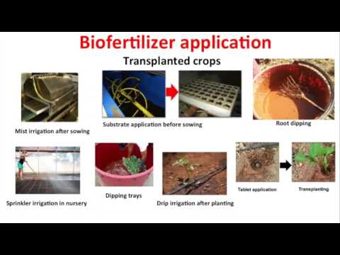 Using Biofungicides, Biostimulants and Biofertilizers