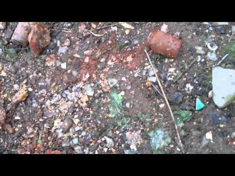 Bottle Digging at the Local Bottle Dump