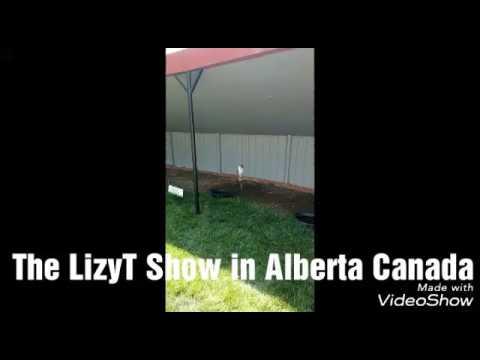 The LizyT Show in Alberta Canada
