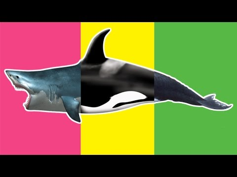 "Thumbnail: Baby play ""Animals Match Up"" Learn Sea Animal Names Real Shark Whale at Under the Sea World"