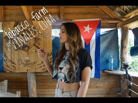 Smoking Fresh  Cohiba's From A Tobacco Farm In Vinales, Cuba