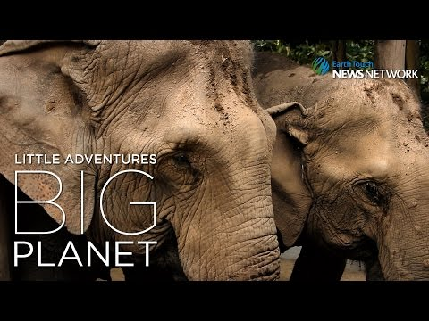 A Sanctuary For The Abused Elephants Of Thailand
