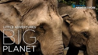 Download Video A sanctuary for the abused elephants of Thailand MP3 3GP MP4