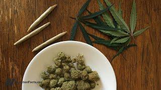 Účinky marihuany na přibírání a hustotu kostí