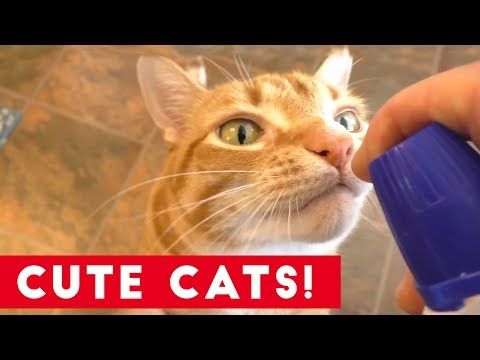 Funniest Cats And Kittens Compilation 2017   Best Cute Cat Videos Ever