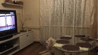Мой пёс смотрит фильм про собак