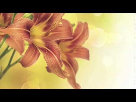 Musica Romantica: Musica di Sottofondo per Cena Romantica, Video