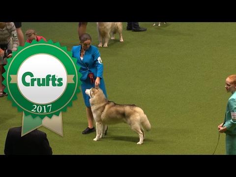 International Junior Handling - Part 4/4 | Crufts 2017