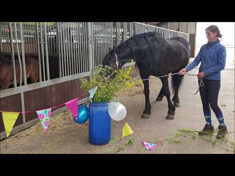 What are the Friesian horses doing with my birthday present!?