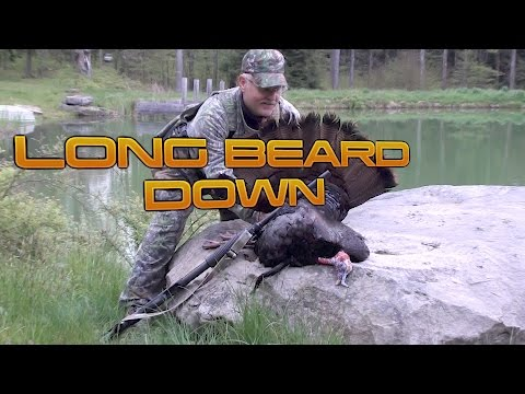 Spring Gobbler Hunting 2017  Dad's Long Beard