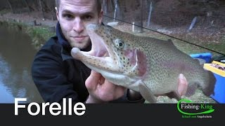 Forellen-Angeln: Die beste Technik im Winter! | Fishing-King.de