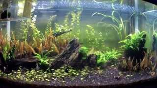 Should I Get a 40 Gallon Breeder Aquarium?