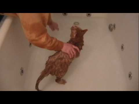 urinary infection in male cats