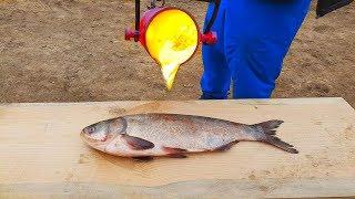 EXPERIMENT: LAVA vs FISH