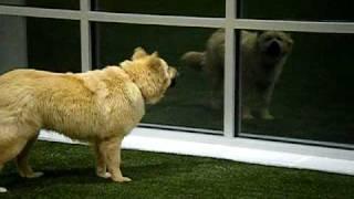Zoe At Unleashed Indoor Dog Park