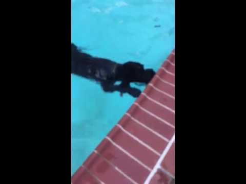Funny dog goes for a swim