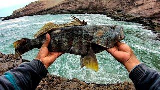 PESCA de cabrilla con señuelos blandos || Rock fishing, with vinyl.