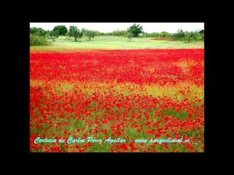 De mil colores rosario flores youtube for De mil colores