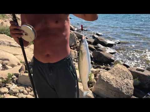 Рыбалка на Каспий,на кефаль