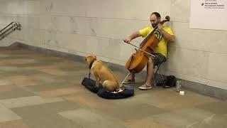 Собаку тошнит от классической музыки