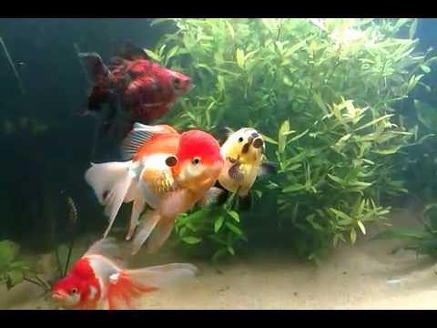 De vissen gek op hun vissensnoepje