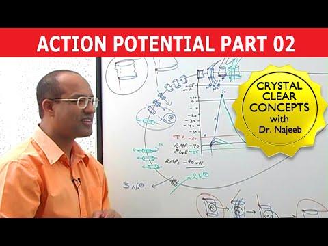 Action Potential - Part 2/3