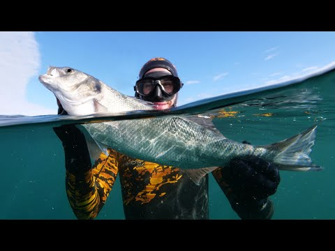 Spearfishing UK - INSANE Numbers Of Fish - With Daniel Mann!