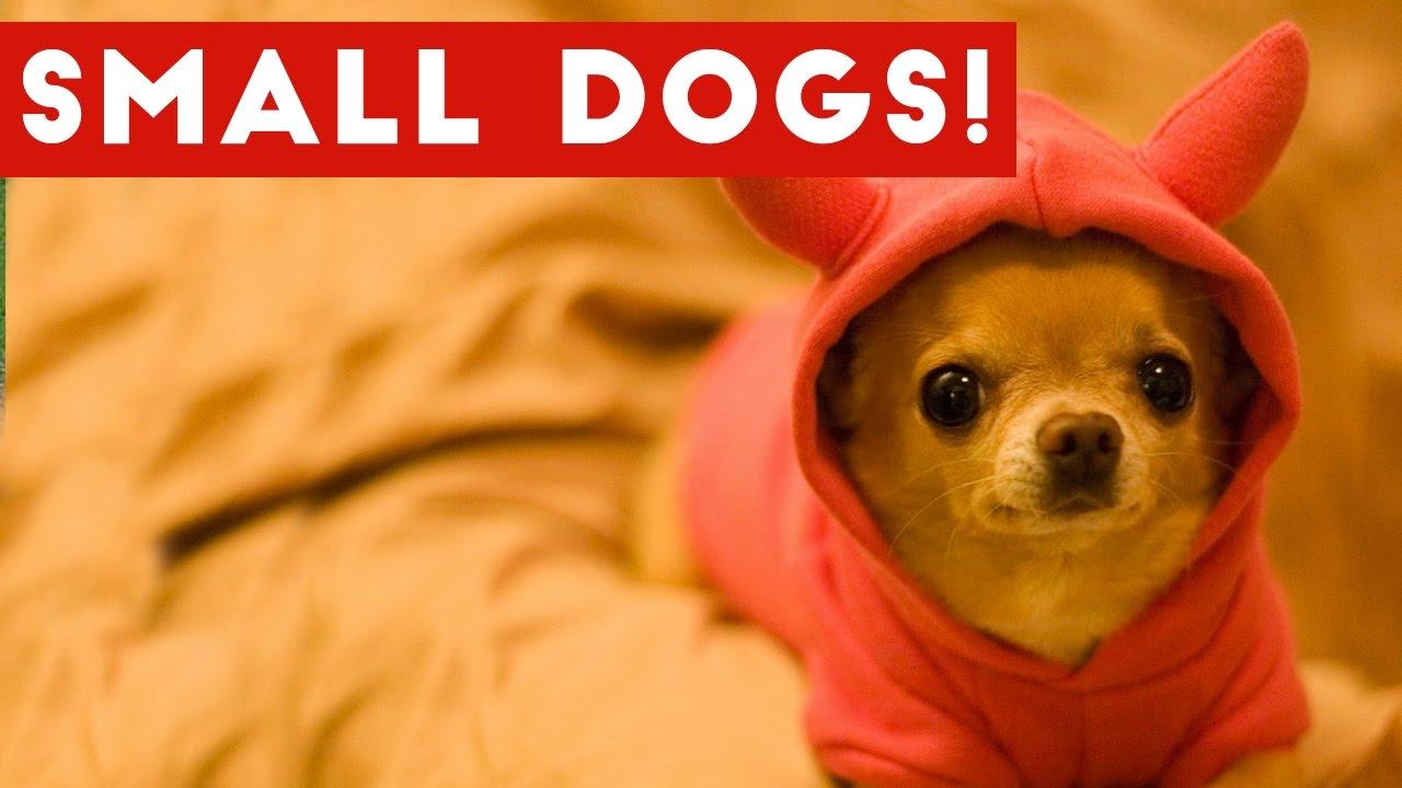 Dog Breeds And Attitudes