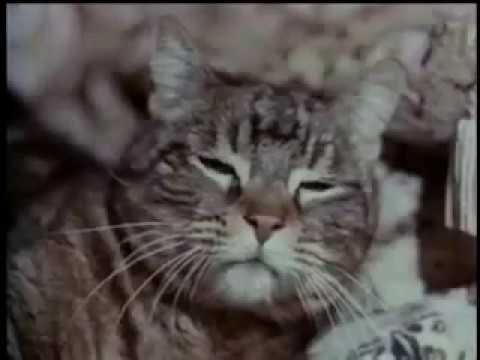 Amityville   The Evil Escapes -  Horreur film complet en francais