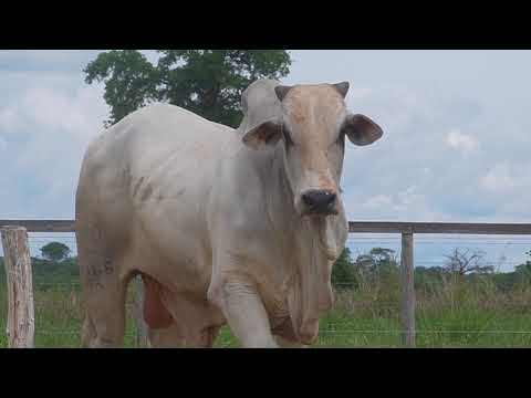 LOTE 063   GPO A 3066
